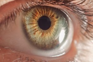 Accent Eye Care macro-eye-PTTA82T