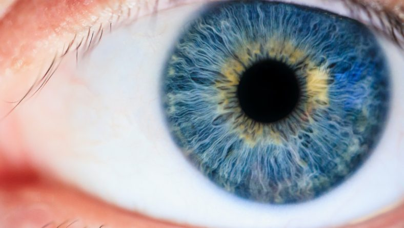 Accent Eye Care How Do our Eyes Function?